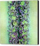 Crown Flower Lei Canvas Print by Jade Moon