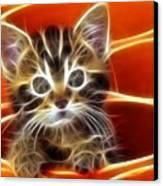 Curious Kitten Canvas Print by Pamela Johnson