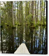 Cypress Garden Swamp Canvas Print by Dustin K Ryan
