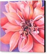 Dahlia 2 Canvas Print by Phyllis Howard