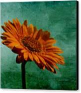 Daisy Daisy Canvas Print by Georgia Fowler