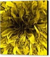 Dandelion Canvas Print by Ryan Kelly