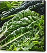 Dark Green Leafy Vegetables Canvas Print by Elena Elisseeva