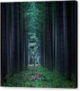 Dark Side Of Forest Canvas Print by Svetlana Sewell