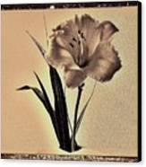 Daylily Of Old Canvas Print by Marsha Heiken