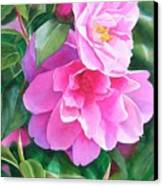 Deep Pink Camellias Canvas Print by Sharon Freeman