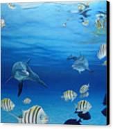 Delphinus Canvas Print by Angel Ortiz
