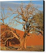 Desert Beauty Canvas Print by Joe  Burns