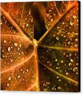 Dew Drops Canvas Print by Susanne Van Hulst