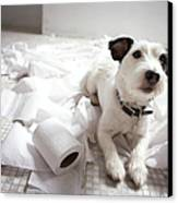 Dog Lying On Bathroom Floor Amongst Shredded Lavatory Paper Canvas Print by Chris Amaral