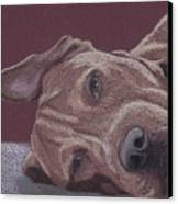 Dog Tired Canvas Print by Stacey Jasmin