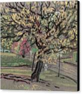 Dogwood Canvas Print by Donald Maier