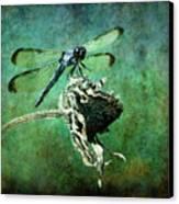 Dragonfly Art Canvas Print by Sari Sauls