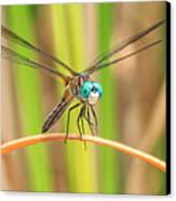 Dragonfly Canvas Print by Everet Regal
