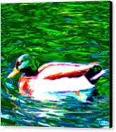 Duck Canvas Print by Everett White