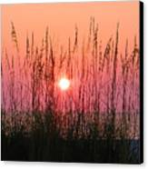 Dune Grass Sunset Canvas Print by Bill Cannon
