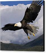 Eagle Flying In Sunlight Canvas Print by John Hyde - Printscapes