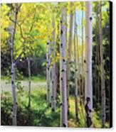 Early Autumn Aspen Canvas Print by Gary Kim