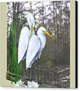 Egrets And Cypress Pond Canvas Print by Kevin Brant