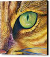 El Gato Canvas Print by Brian  Commerford