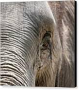 Elephant Eye Canvas Print by Jeannie Burleson