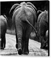 Elephants In Black And White Canvas Print by Johan Elzenga