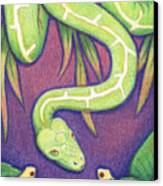Emerald Tree Boa Canvas Print by Amy S Turner