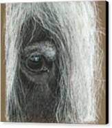 Equine Eye Detail Canvas Print by Terry Kirkland Cook