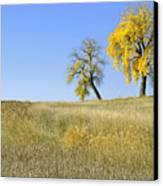 Fall Days In Fort Collins Co Canvas Print by James Steele