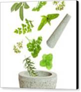 Falling Herbs Canvas Print by Amanda Elwell