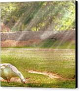 Farm - Geese -  Birds Of A Feather - Panorama Canvas Print by Mike Savad