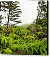 Fern And Norfolk II Canvas Print by Ron Dahlquist - Printscapes