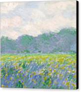 Field Of Yellow Irises At Giverny Canvas Print by Claude Monet