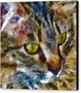 Fletcher Kitty Canvas Print by Marilyn Sholin