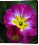 Flower In Spring Canvas Print by Deborah Benoit