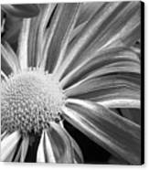 Flower Run Through It Black And White Canvas Print by James BO  Insogna