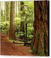 Forest Canvas Print by Les Cunliffe