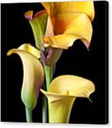 Four Calla Lilies Canvas Print by Garry Gay
