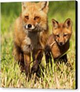 Fox Family Canvas Print by Mircea Costina Photography