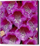 Foxglove Canvas Print by Diane E Berry