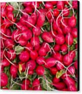 Fresh Red Radishes Canvas Print by John Trax