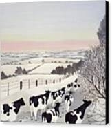 Friesians In Winter Canvas Print by Maggie Rowe