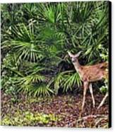 From The Palmetto Bushes Canvas Print by Jan Amiss Photography