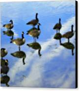 Geese Lake Reflections  Canvas Print by Randy Steele