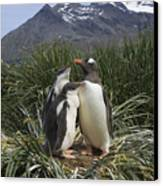 Gentoo Penguin And Young Chicks Canvas Print by Suzi Eszterhas