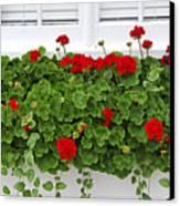 Geraniums On Window Canvas Print by Elena Elisseeva