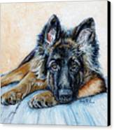 German Shepherd Canvas Print by Enzie Shahmiri
