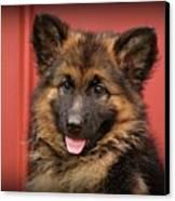 German Shepherd Puppy - Queena Canvas Print by Sandy Keeton