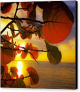 Glowing Red II Canvas Print by Stephen Anderson