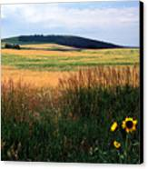 Golden Fields Forever Canvas Print by Kathy Yates